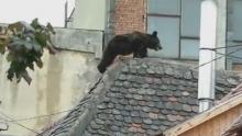 ursul-176-kilograme-impuscat-sibiu