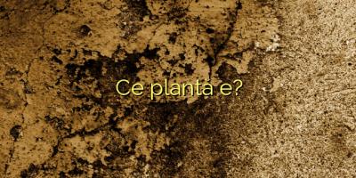 Ce plantă e?